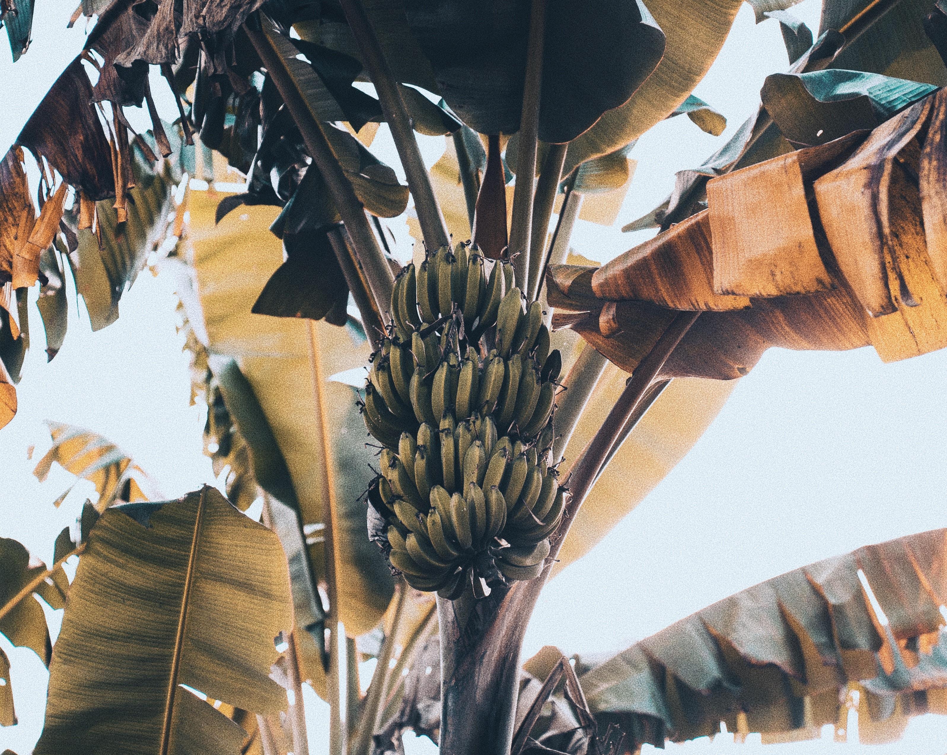 bananero, ke buena.Sigma Radio